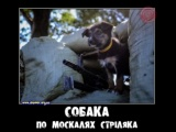 Собака - стриляка
